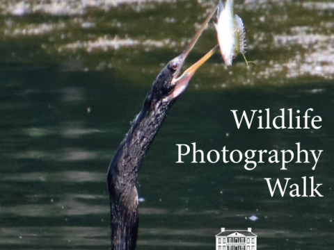 august 2019 charleston sc events drayton hall wildlife photography walk
