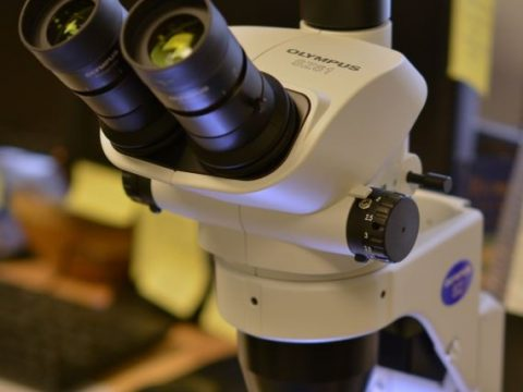 june 2019 under microscope event drayton hall